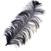 "Ostrich Wing Feathers 18-24"" Premium Quality 1/2 Lb Black"